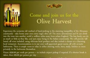 olive-harvest2